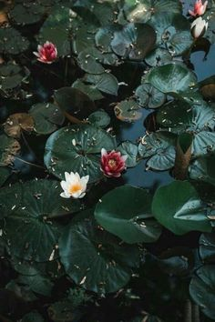 House Remodeling Is Residence Improvement Lily Pads Blooms Nature Architecture, Slytherin Aesthetic, Nature Aesthetic, Aesthetic Wallpapers, Planting Flowers, Nature Photography, Scenery, Bloom, Decoration