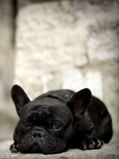 ♤Cães - lDog Pictures