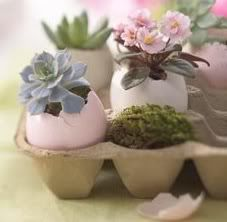 Violets in Eggshell planters