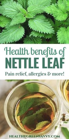 Nettle tea tastes great and may help with allergies, arthritis pain, and more. Learn more about the powerful benefits of nettle tea! Calendula Benefits, Lemon Benefits, Matcha Benefits, Coconut Health Benefits, Nettle Tea Benefits, Natural Health Remedies, Natural Cures, Herbal Remedies, Natural Healing
