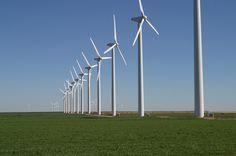 Parque eólico A Brazos Wind Farm, também conhecido como Green Mountain Energy Wind Farm, perto de Fluvanna, estado do Texas, USA. Observe o gado que pasta sob as turbinas.  Fotografia: Leaflet.