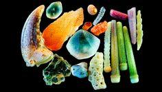 Quando nos queremos referir a algo insignificante, damos muitas vezes o grão de areia como exemplo. Mas talvez essa não seja a forma mais acertada de nos expressarmos. Greenberg colocou areia de diferentes lugares (e ele explica que a composição varia muito de acordo com o lugar) sob o olhar detalhado do seu microscópio, ampliando cada grão entre 100 a 300 vezes. O resultado é de cortar a respiração.