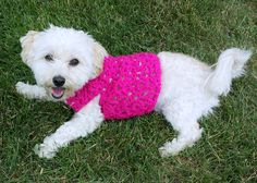 small dog clothes /pink dog vest /custom dog sweater /yorkie clothes /whippet sweater /dachshund clothes /teacup dog clothes /pink dog coat by HappyDogLucky on Etsy