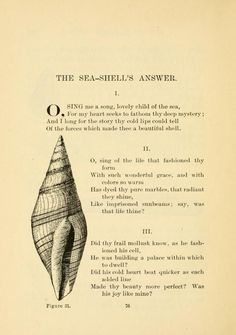 Shells and Sea Life. FREE contains pages of stories, poems, and practical knowledge about the life that teems in the sea. Sea Poems, Sea Quotes, Nature Quotes, Shell Island, Sea Witch, Gratitude Quotes, Magic Words, Beach Signs, Romantic Love Quotes