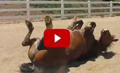 """Let's Start with a GOOD LAUGH – Meet Archie """"The Horse Passing Gas"""""""