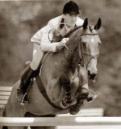 Show Jumping Horses, Show Horses, Olympic Equestrian, Pony Style, Breyer Horses, Horse Girl, Horse Racing, Race Horses, Thoroughbred