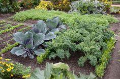 Kleines Gemüsebeet