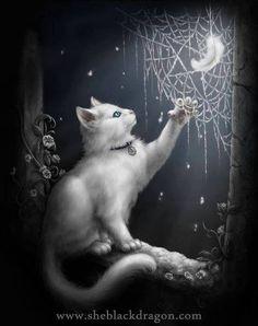 Witte kat met de maan.................lbxxx.
