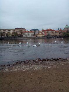 Running swans :D :D