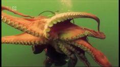 Vetřelci z hlubin - skvělý dokument o vysoké inteligenci chobotnic Space Documentaries, Documentary Film, Youtube, Amazing, Youtubers, Youtube Movies