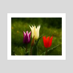 #INPRNT #fine art #print #poster #art Print Poster, Tulips, Fine Art, Art Prints, Printed, Gallery, Paper, Garden, Floral