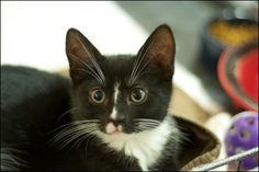 Frankie and Valli are ready for adoption!