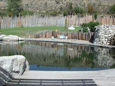 filtered swimming pond.  Beautiful and natural in its setting