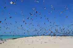 Michaelmas Cay a bird sanctuary in the middle of the Great Barrier Reef. Amazing place! . Michaelmas Cay é um banco de areia permanente que funciona como um santuário de pássaros no meio da Grande Barreira de Corais. Sensacional! . #michaelmascay #cairns #greatbarrierreef #tropicalnorthqueensland #queensland #australia #discoverqueensland #birds #instagram #instatravel #travelgram #travel  #travellers #worldtravel  #travelling #backpacking #beautifuldestinations #destinations…