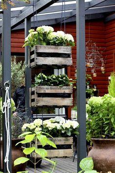 Puulaatikoista tehdyssä kukkakeinussa viihtyvät jalohortensiat. Small Space Gardening, Small Gardens, Garden Shop, Home And Garden, Side Garden, Plant Wall, Outdoor Rooms, Garden Styles, Garden Planning