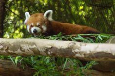 Bamboo!!! Yummy