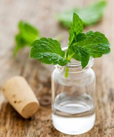 DIY Peppermint Pre-shampoo treatment! Soften your hair and get that spa tingle :)