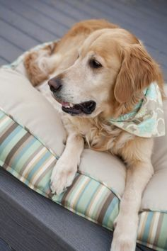 Of alllll breeds I think the Golden Retreiver is the cutest with age...they just look sooo wise and that they live a fun ful filled life.