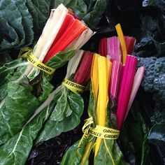 #farmersmarketnyc #chard in #Manhattan - Union Square Greenmarket via unsqgreenmarket on Instagram