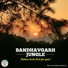 """#BandhavgarhJungle"" Nature at its best for you!!!"
