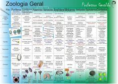 Profª Grasiela Pasinato: Tabela - Zoologia