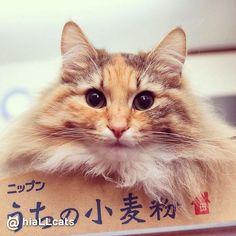 Its <3 #fluffy #beautiful #cuties #purr