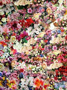 How beautiful!  I want a garden full of flowers.