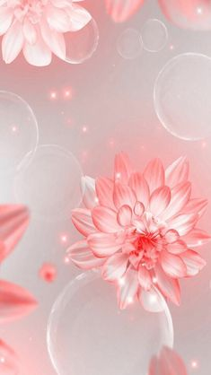 Wallpaper iphone flowers pink backgrounds in 2019 обои, фотографии природы, Plain Wallpaper Iphone, Flowery Wallpaper, Trendy Wallpaper, Cute Wallpaper Backgrounds, Flower Backgrounds, Cellphone Wallpaper, Phone Backgrounds, Screen Wallpaper, Cool Wallpapers For Phones