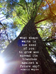 """""""What shape waits in the seed of you, to grow and spread its branches against a future sky?"""" - David Whyte"""