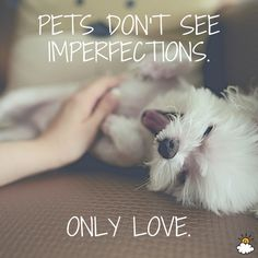 """""""Pets don't see imperfections. Only love."""" Inspiring quotes from LittleThings"""