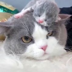 Top 25 Cute Kittens and Funny Cats Cute Cats And Kittens, Baby Cats, I Love Cats, Kittens Cutest, Pics Of Kittens, Cute Kitten Videos, Newborn Kittens, Cute Funny Animals, Cute Baby Animals