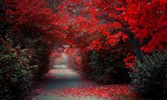 Autumn Red Leaves Road Wallpaper
