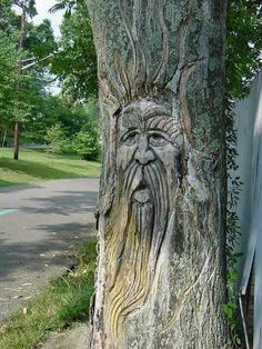 I love this but wouldn't want to hurt the tree to do it.