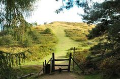 Landscapes :: Earl's Hill, Iron Age Hill Fort, near Pontesbury ...