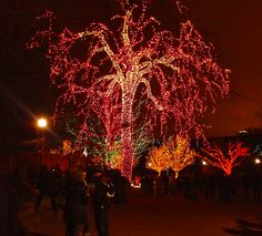 Winter things to do in Chicago- Zoo lights at Lincoln Park Zoo!