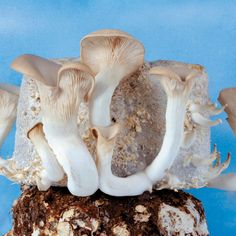 Interested in growing mushrooms at home