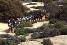 Gran Canaria: Camel ride through Maspalomas dunes.  :)