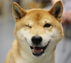 Japanese winky dog.