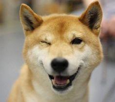 Japanese winky dog.