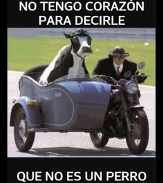 You will never be riding a motorcycle with a cow in the sidecar cool. Enigma Variations, Fotografia Retro, Animal Pictures, Funny Pictures, Cow Pictures, Funny Images, Funny Animals, Cute Animals, Funny Cows
