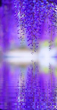 * Purple Reflection