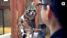 Hey, Steve.