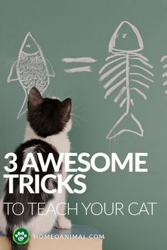 Here are handy tips which can help you in training your cat. Keeping this in mind, training a cat probably seems hopeless, but in truth anything is possible