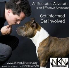 the no kill nation (we're getting there)