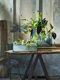 Seaux, vases, coupes… Composez des mini-bassins d'intérieur