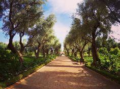 Oasis in the middle of the Medina. #maroc #gopro @lamamouniamarrakech @gopro