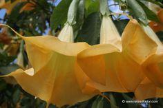 La Reunion Pflanzen www.reisedoktor.com