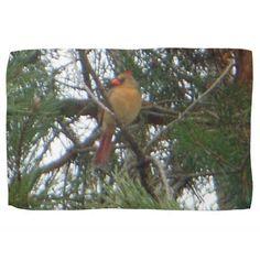 Female Northern Cardinal Austrian Pine Tree Towel