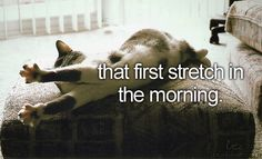 That first stretch in the morning