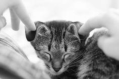 Funny Kittens PICs